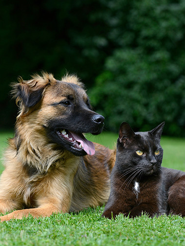 Cat and dog sitting down together in grass